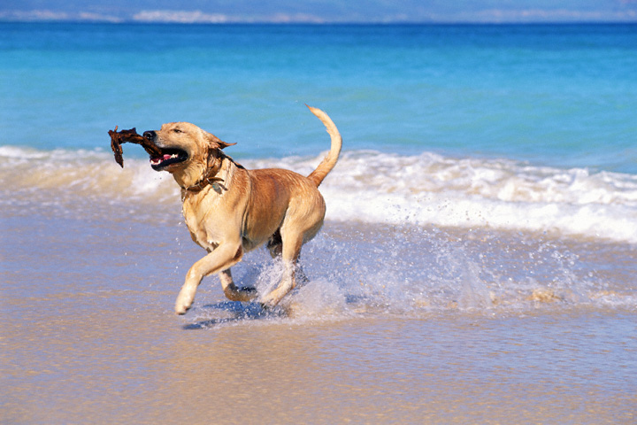 dog-beach-italia-detercom-professional